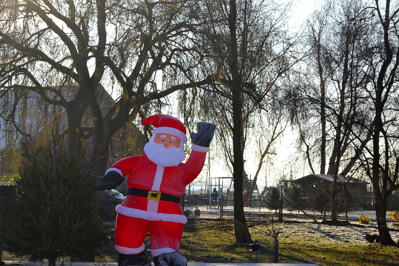 Nordmann Excellent kerstbomen Cruquius